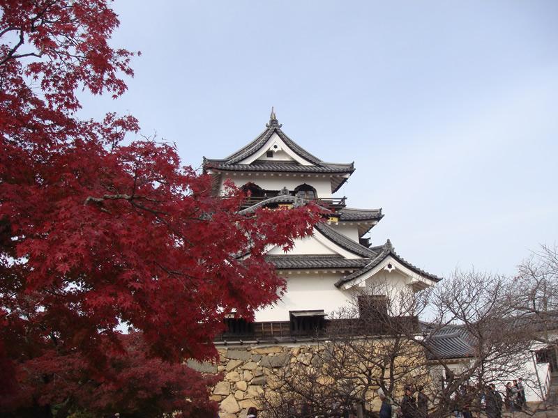 彦根城と紅葉