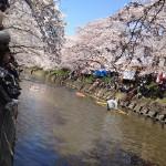 岩倉さくら祭り2012 のんぼり洗い
