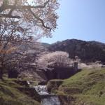 霞間ヶ渓 霞橋と桜