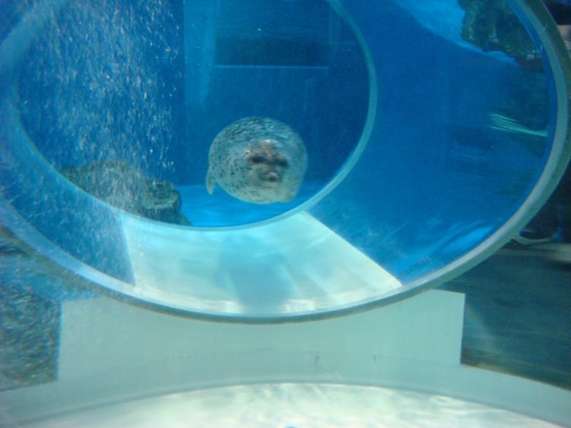 のとじま水族館アザラシ