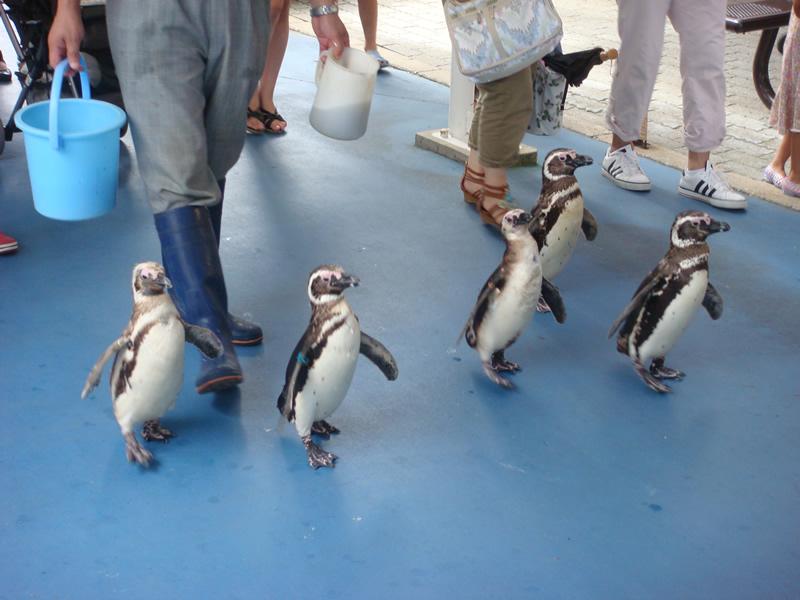 のとじま水族館ペンギン