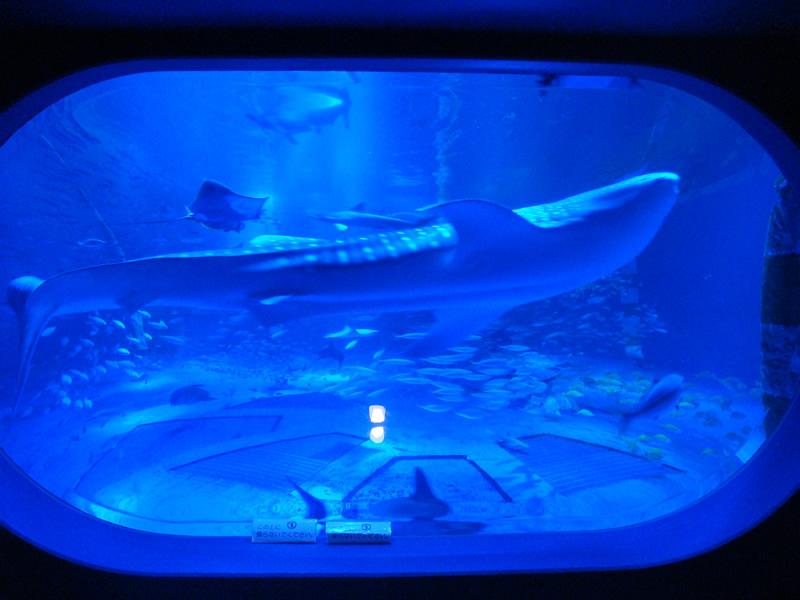 のとじま水族館ジンベイザメ