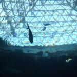 頭上を泳ぐ魚
