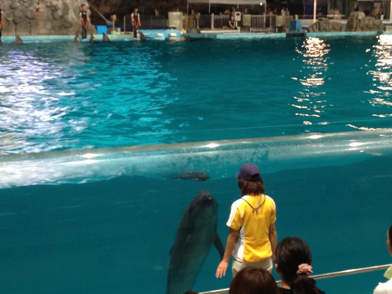 イルカと見つめあう