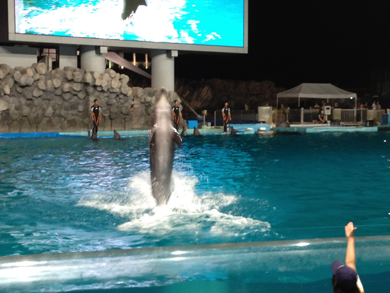 イルカ伸びっ