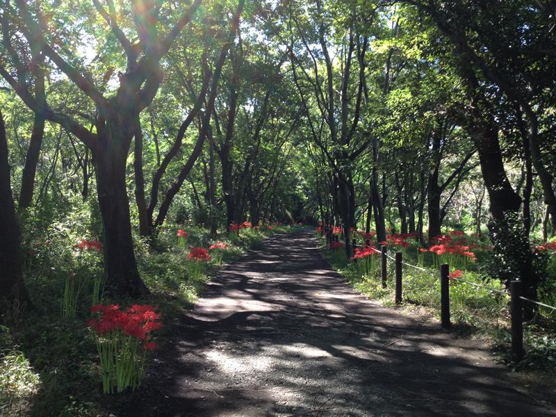 木陰に咲く彼岸花