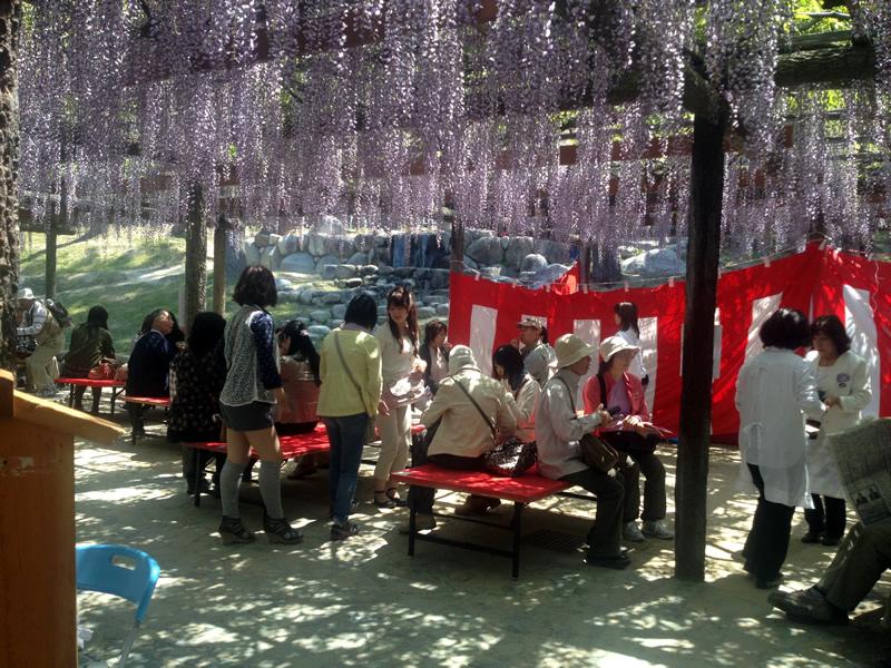 天王川公園 藤祭り お茶席