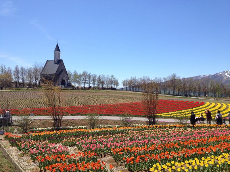 「牧歌の里」チューリップと教会