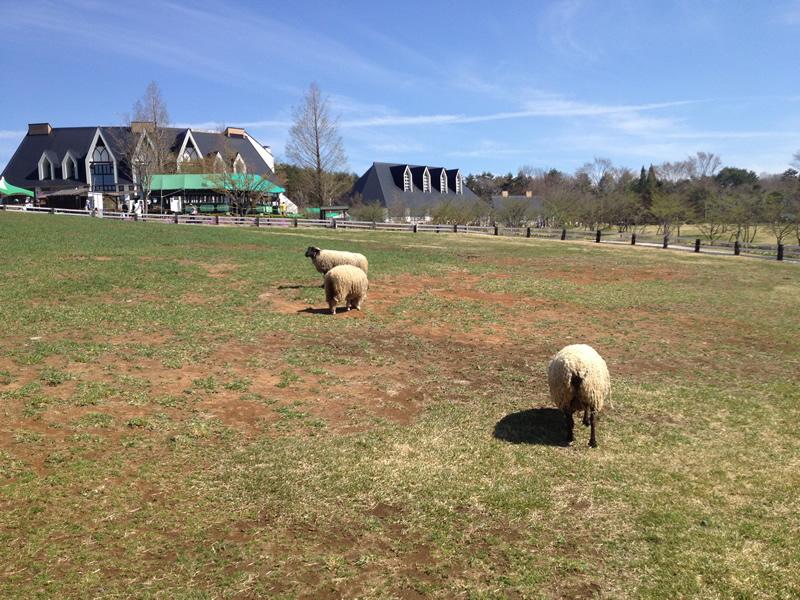「牧歌の里」草を食む羊達
