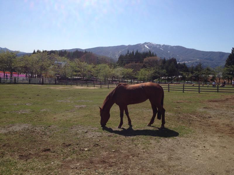 「牧歌の里」草を食む馬