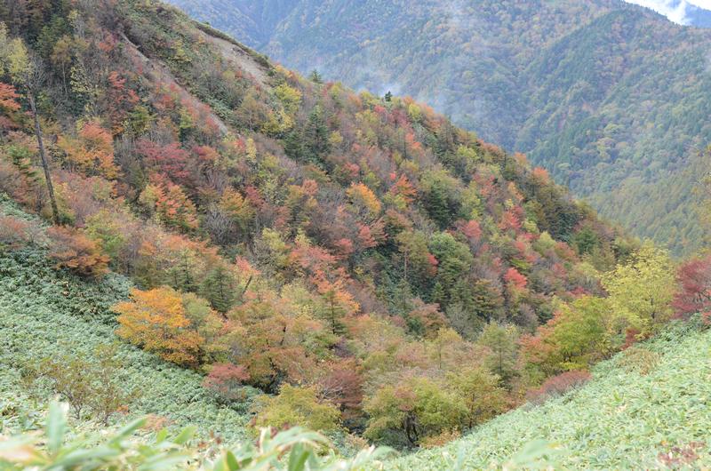 峡谷の紅葉