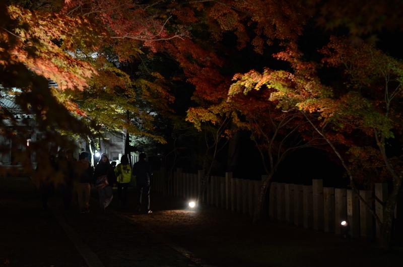永源寺 夜の参道