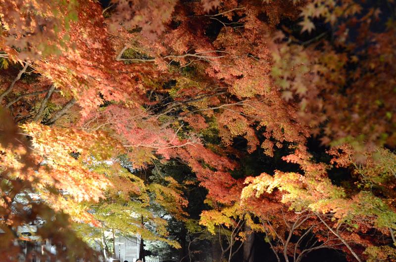 永源寺 紅葉ライトアップ