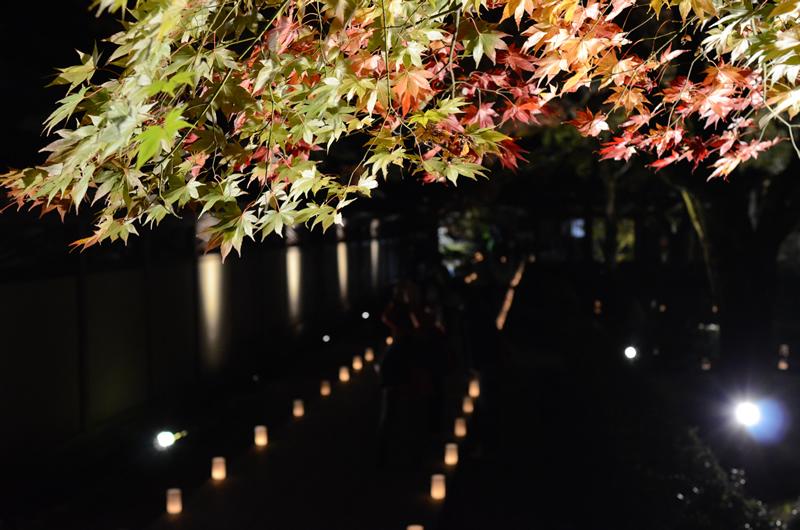 永源寺 紅葉の緑と赤