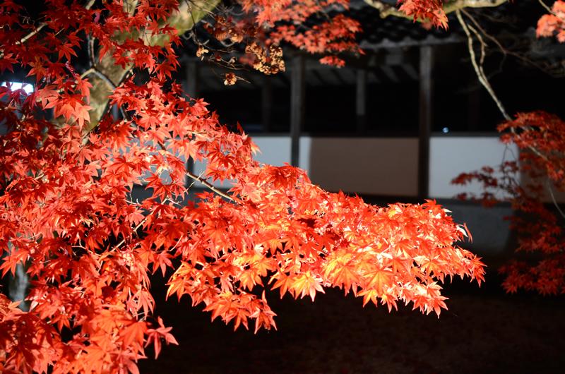 永源寺 色づいた紅葉
