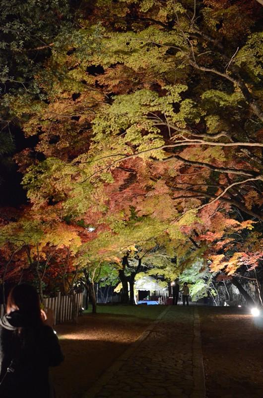 永源寺 紅葉ライトアップ撮影
