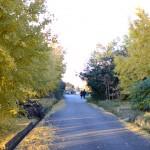 イチョウ並木を散策する人々2