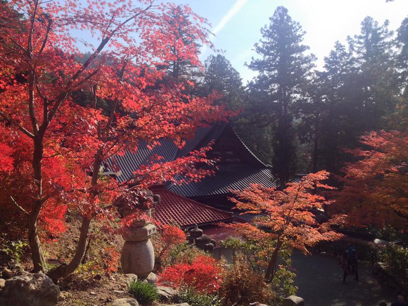 谷汲山の紅葉