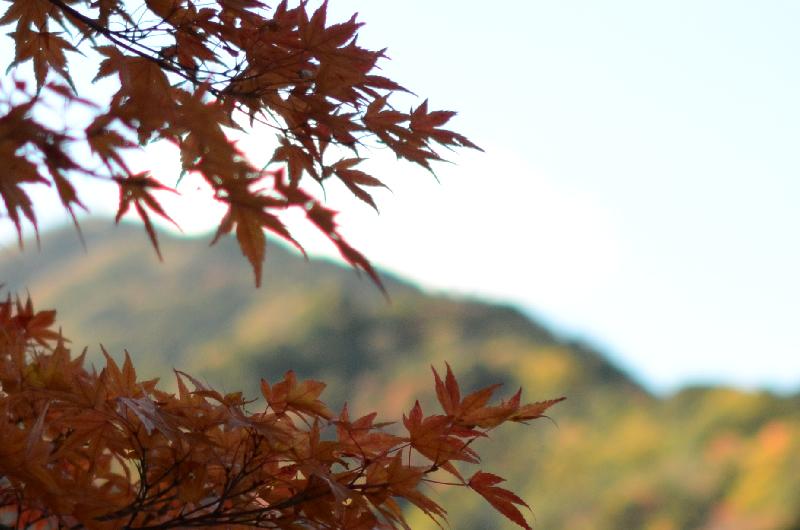 養老の紅葉