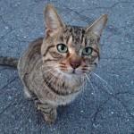 杖突峠のネコ