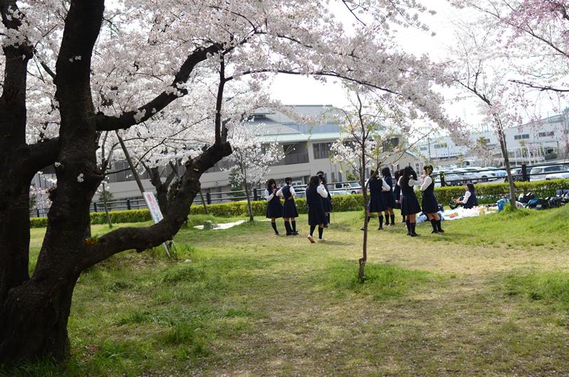 清洲の桜と学生