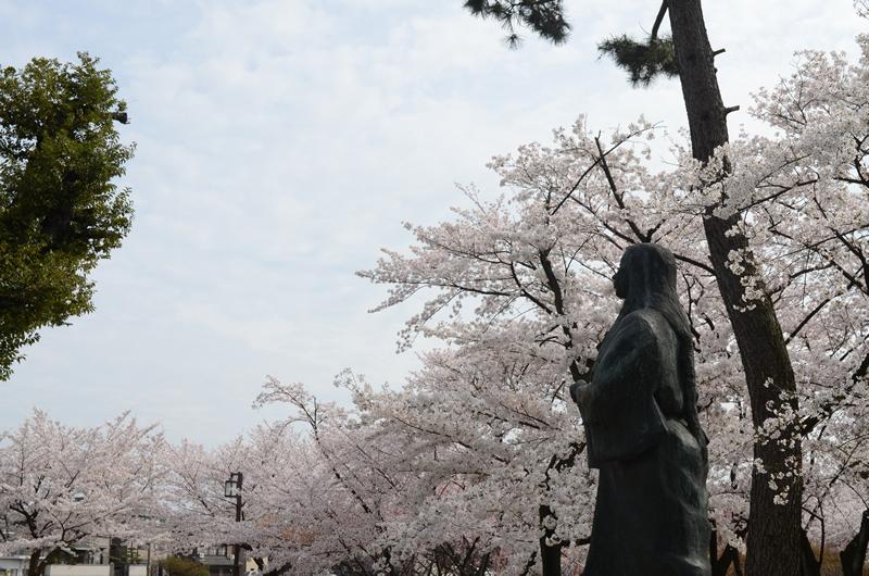 濃姫像と桜