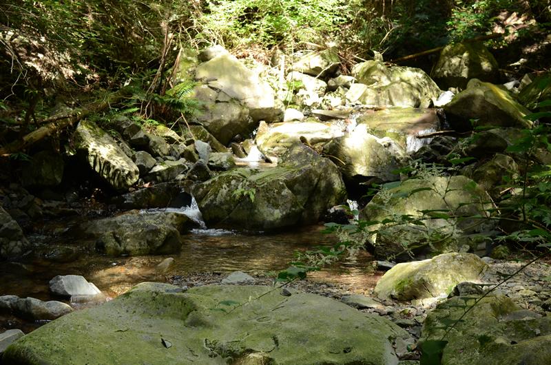 多度山瀬音の森コース