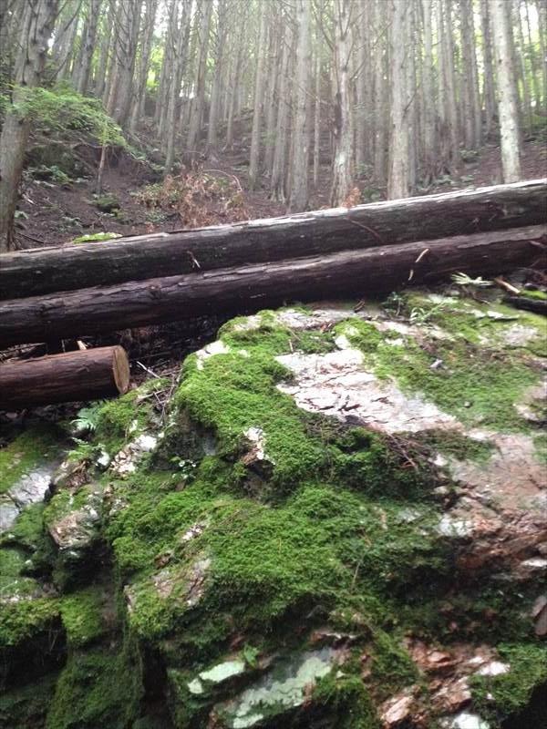 苔むした岩