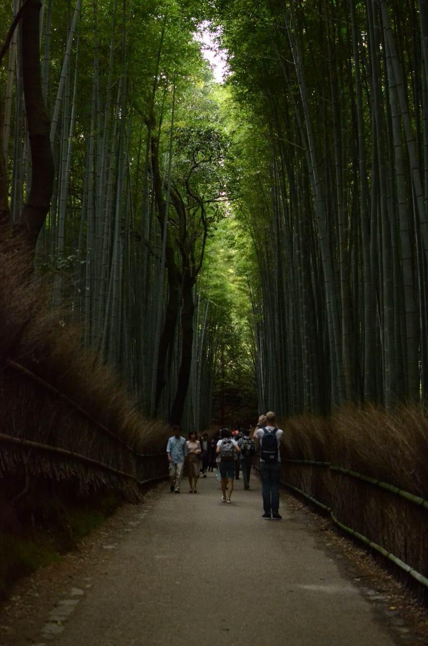 竹林の中を行く