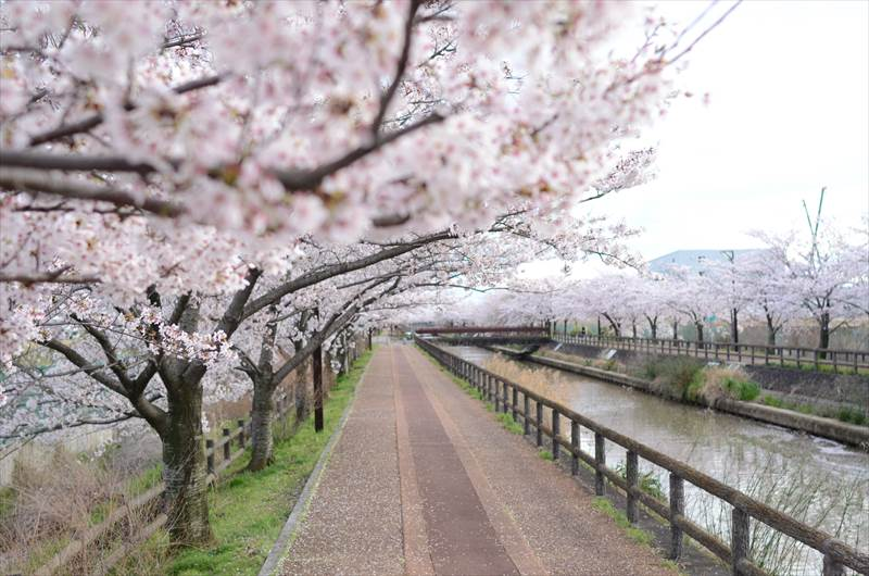 稲沢市桜ネックレス