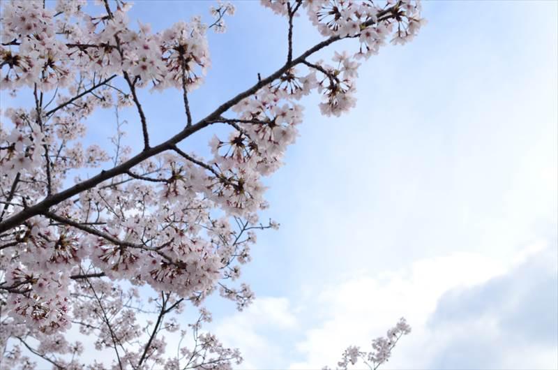 稲沢市平和町桜ネックレス