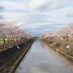 須ヶ谷川桜づつみ散策道