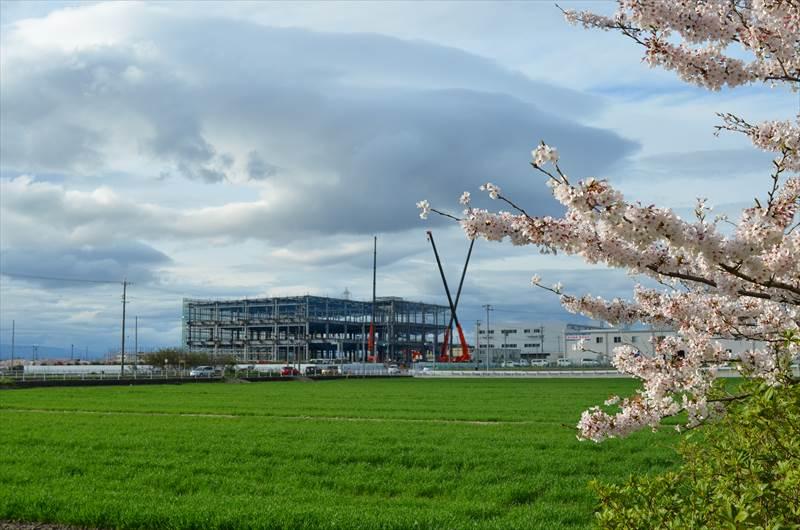 建設中の工場と桜