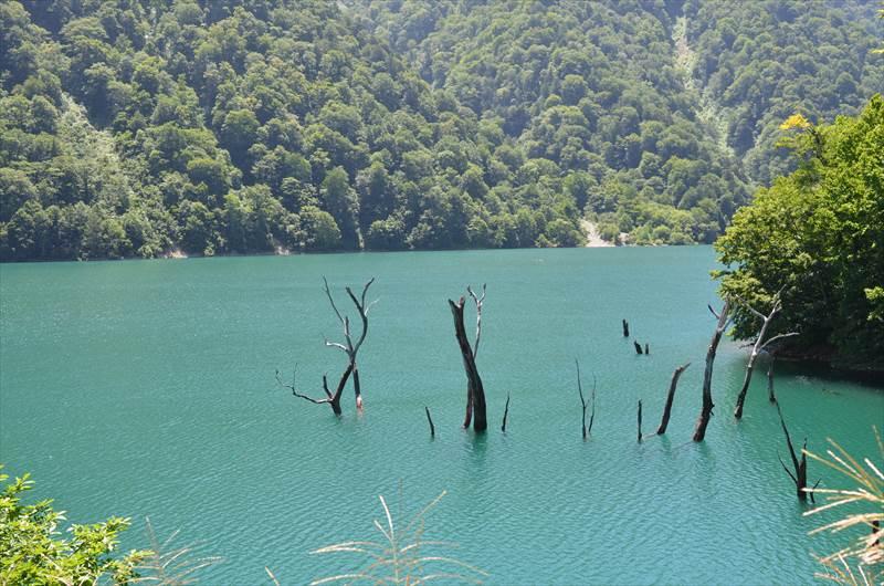 ダム湖の立ち木