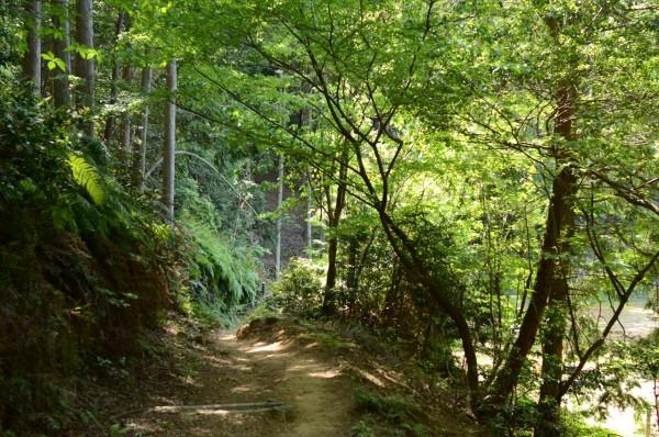 月見の森 ハイキング道中の新緑