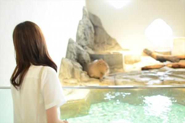 ニフレル水族館 カピバラを鑑賞