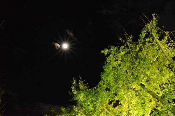 闇夜に光る月と銀杏