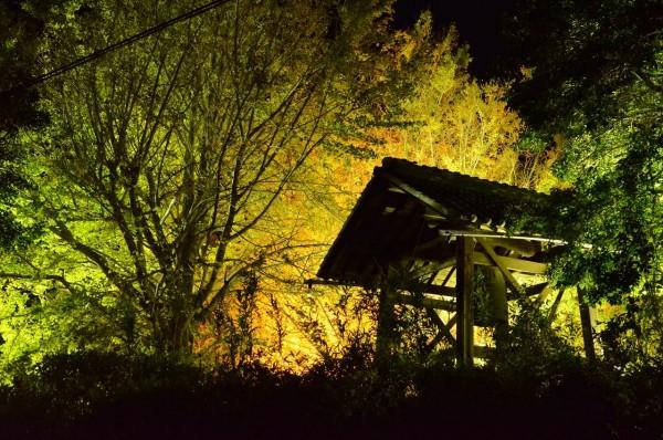 祖父江イチョウ黄葉まつり_祐専寺の鐘つき堂