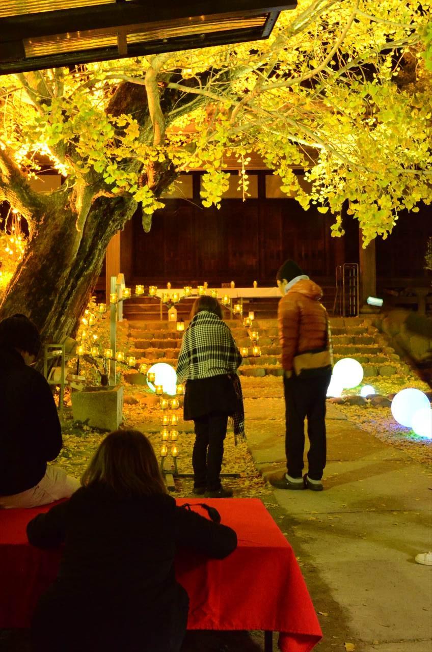 祖父江イチョウ黄葉まつり_祐専寺境内を散策する人々